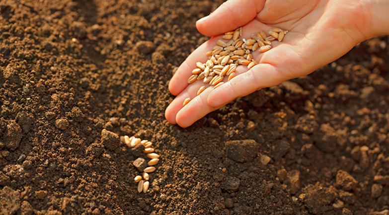 Produit Terre à semence - Alain Préfontaine